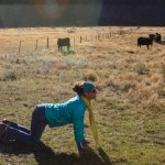 Cow Pose - Molesworth Station Pass