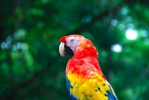 Honduras Yoga Macaw